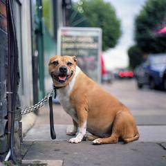 Dog days photo by ted.kozak