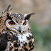 Chouette / Owl