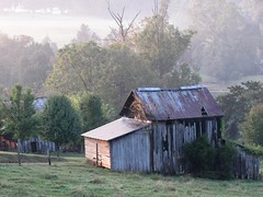 Misty Morning on the Farm photo by Universal Pops (David)