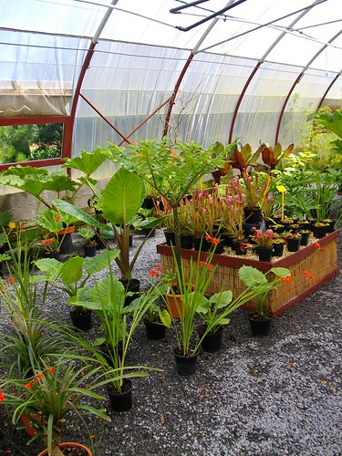 Divers Plantes