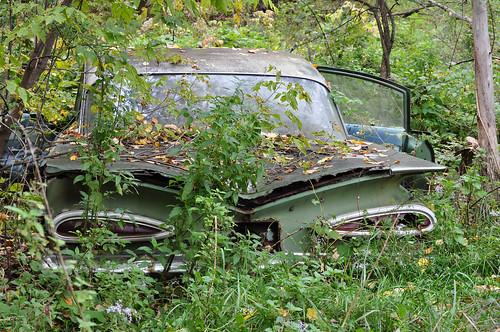 Feral car