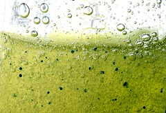 Fresh Lime Basil photo by Albino ©