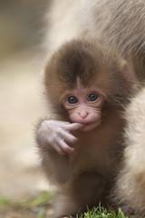 Baby pose photo by Masashi Mochida