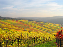 Vineyards Quilt of Nature in Autumn Colours, Germany photo by Batikart