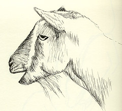 Day 12: Goat