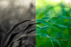 Live Green :: Dedicated to Smokers - EXPLORE photo by Syed Sibt-e-Hassan