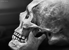 The Beauty of Bones - 1 photo by Ben Heine