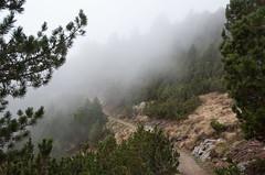 Nebel am Pichlberg