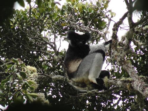 MADAGASCAR 289