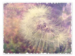 The Dandelion Muse photo by Chickens in the Trees (vns2009)