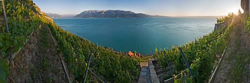 vigne-corniche-3