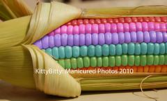 Rainbow Corn 1/99 photo by KittyBitty: Manicured Photos