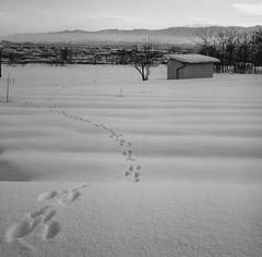 歩み photo by leaping_time