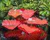 34553137611_809a5ceae1_t