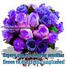 33655746594_900da51011_t