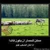 34755853862_4fa5aa7afd_t