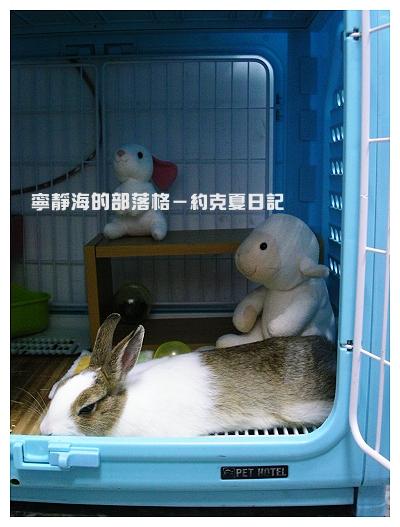 約克夏日記_20060215_慵懶午睡