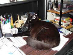 Bear on the Desk
