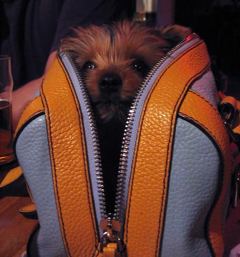 pup in prada