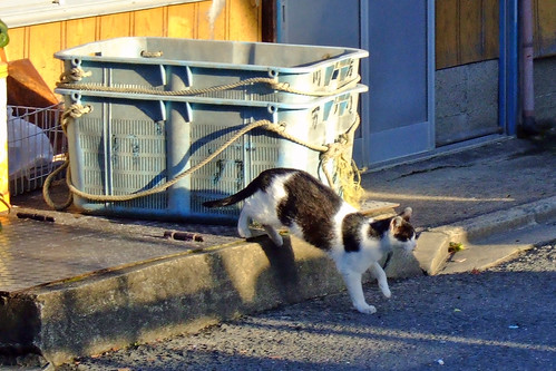 露天商の猫