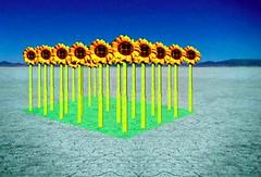 Sunflower Robots