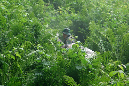 heiner-jungle
