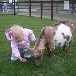 Feeding the goat<br/>04 Apr 2006