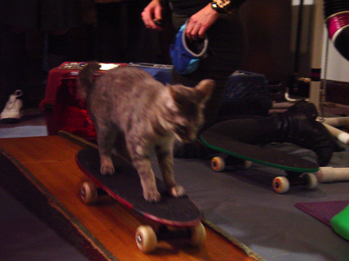 Cat. On. A. Skateboard.