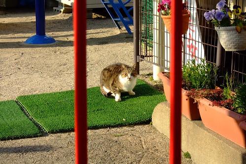 保育園の猫
