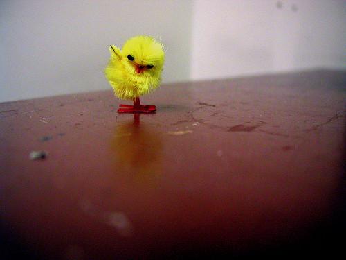 an itty bitty baby chick