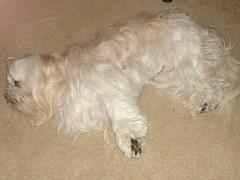 Nigel Sleepers