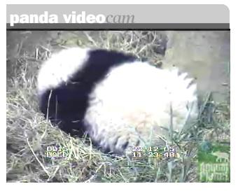 panda_egg2