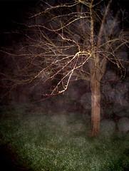 arbre dans la nuit, 221205