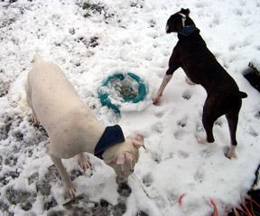 snowdogs0007