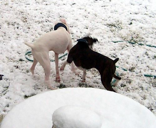 snowdogs0008