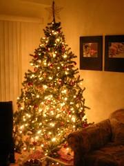 tree in the corner
