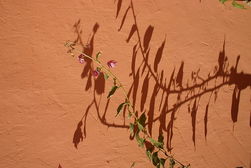 Flowers and shadows, Hotel Tanger, Tafraoute.