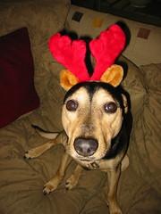 Christmas Cassie 2004