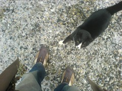 Il gatto Silvestro