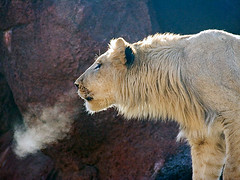 lion's breath photo by flytography.me