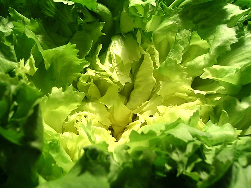 Journey to the Center of Lettuce