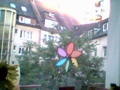 innenhofbaum: fertig mit dem blätteranziehen. mai 2002.