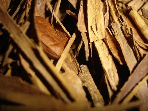 Toasted canela