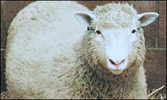 Dolly_sheep