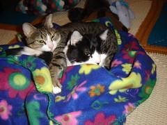 Gatitos com frio