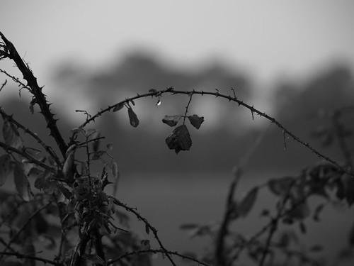 imagenes en blanco,negro y gris.