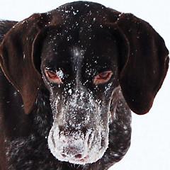 Snownose