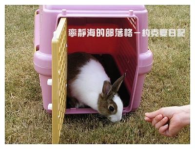 約克夏日記_20060214_放兔吃草