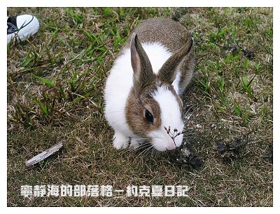 約克夏日記_20060214_約克夏嚐百草