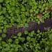 TRONCO SECO VERDE - GREEN DRY BOLE
